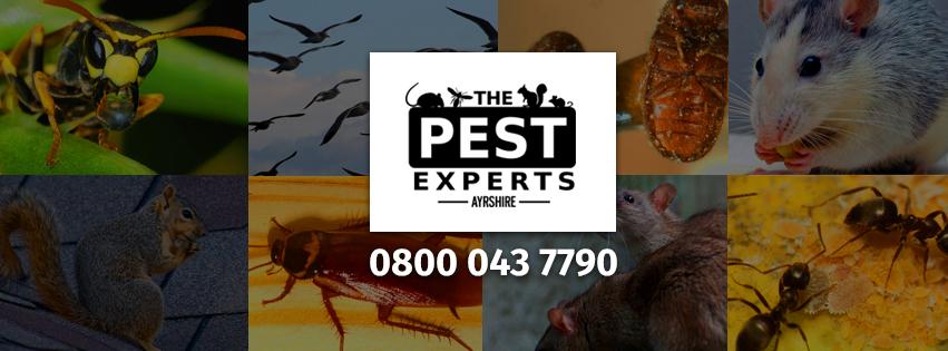 pest removal ayrshire renfrewshire lanarkshire