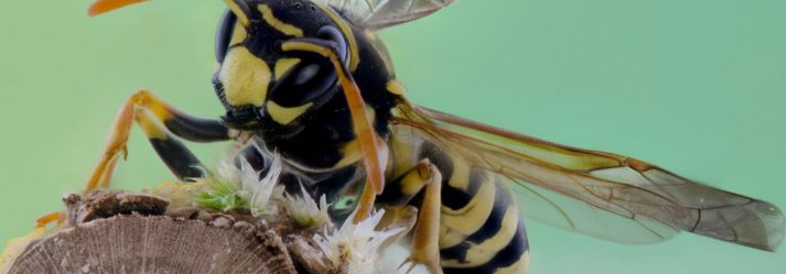 Wasps Busy This Summer