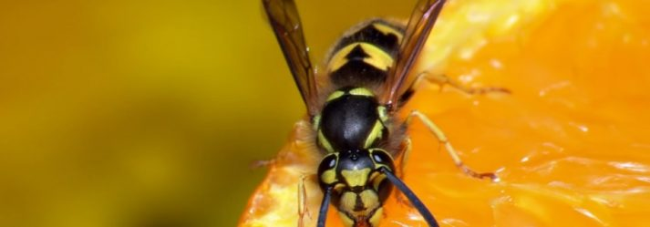 How to prevent wasps from being attracted to your home