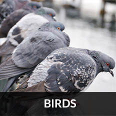 pest control glasgow for birds