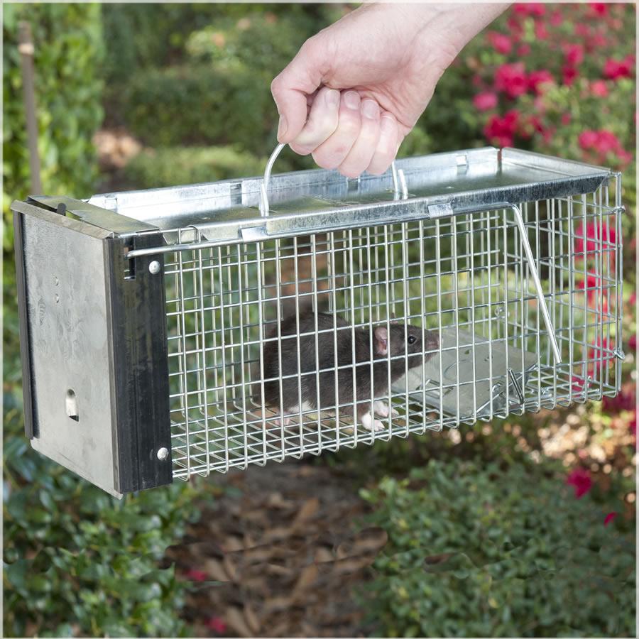live rat traps for rat control pest control glasgow