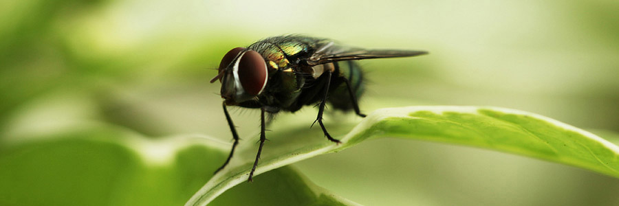 same day pest control for insects irvine