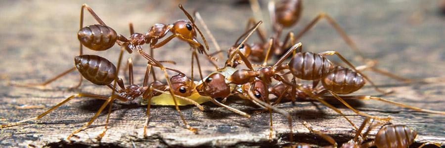 same day pest control for ants kilmarnock