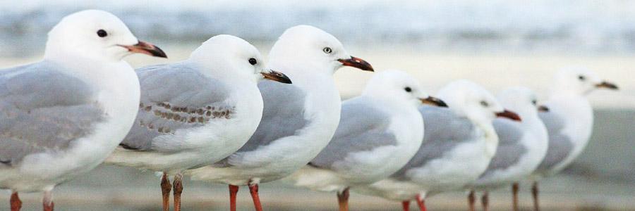 same day pest control for birds Kilmarnock