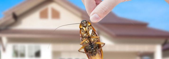 4 Plumbing Leaks That May Lead To A Pest Infestation