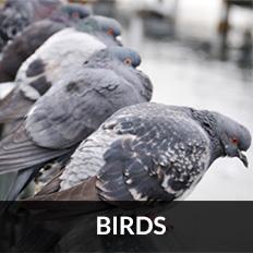 pest control East Kilbride for birds