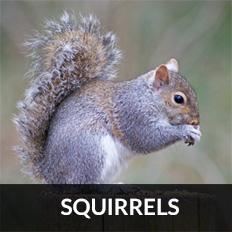 pest control East Kilbride for squirrels