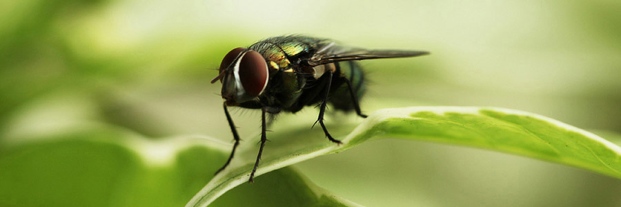 same day pest control for insects hamilton